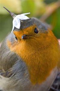 Bird + flower